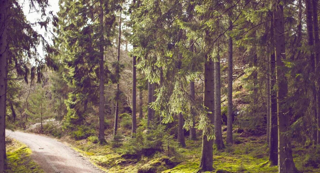 Enduring Success - Road in the middle of a forest