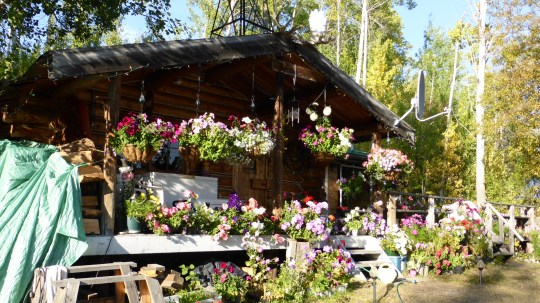 Nancy Ball's log cabin covered with colourful hanging baskets.