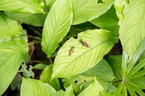 Junglehoppers