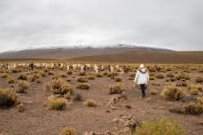 Anna and the running llama's