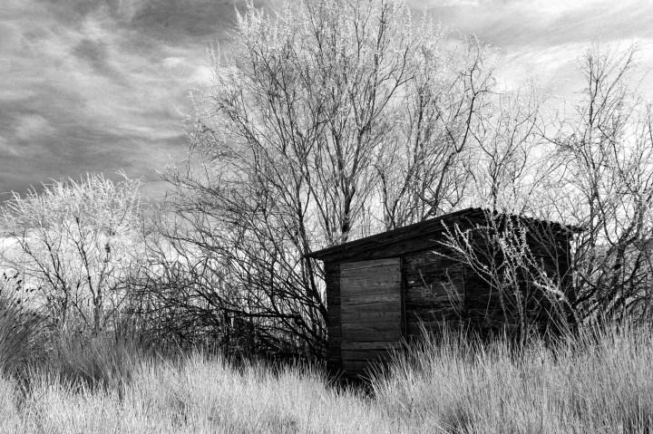 Hut Amongst Trees