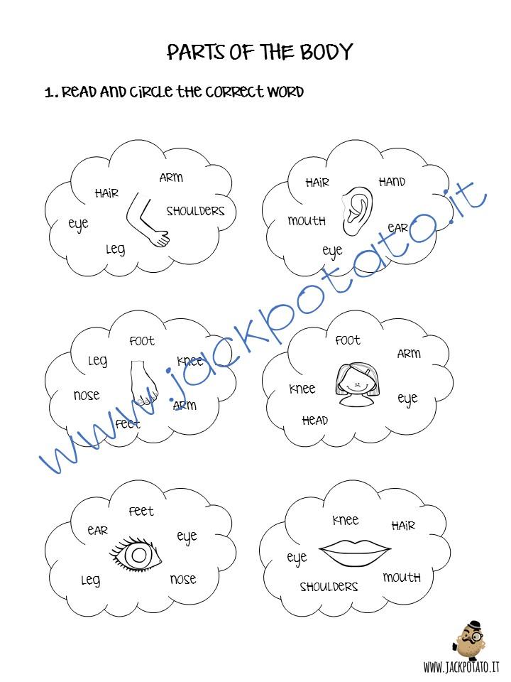 Préférence Parti del corpo: giochi e attività per la classe - Jack Potato OX89