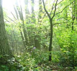 bushcraft camp | south east | Kent