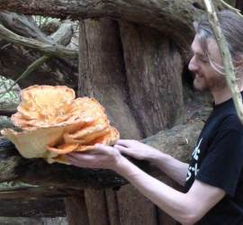 foraging for fungus