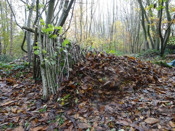 Leaf litter going onto a 1 person debris shelter