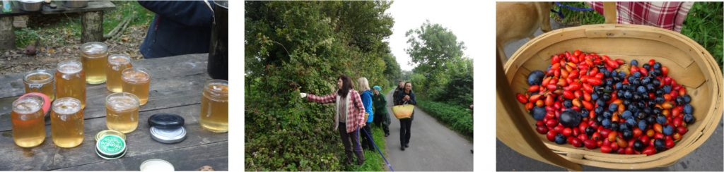 1 day autumn foraging course | Kent | London | south east