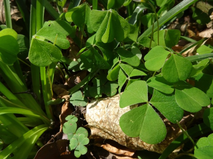 forage   south east   Kent   Sussex   London   5 easily identifiable plants to forage