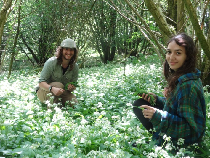 Foraging for ramsons