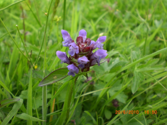 herbal first aid | herbal remedies | hedgerow medecine