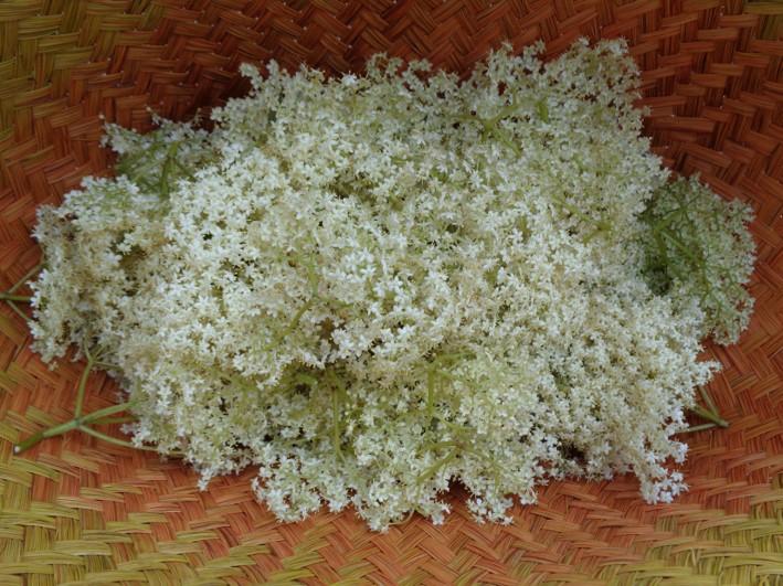 elder flower cordial recipe | Kent | London | south east | Essex