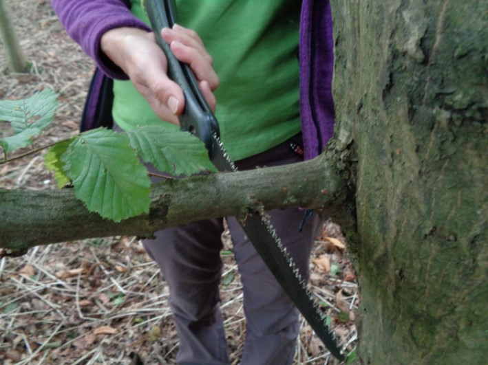 pruning cuts | bushcraft | south east | London | Kent