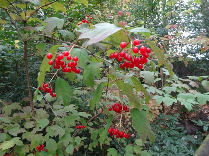 bushcraft | herbal remedies | Kent | south east | London