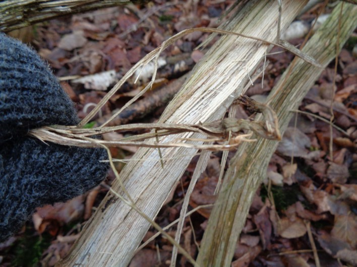 outer barks as tinder | bushcraft | fire lighting | Kent | south east | London