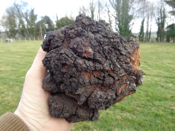 fungus as tinder | bushcraft | Kent | south east | London