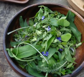 wild leaf salad | foraging | wild foods | bushcraft | Kent | London | south east |