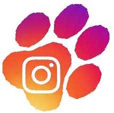 instagram Canali Social