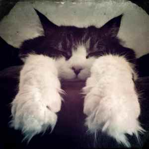 """The classic """"Paw Shot"""""""