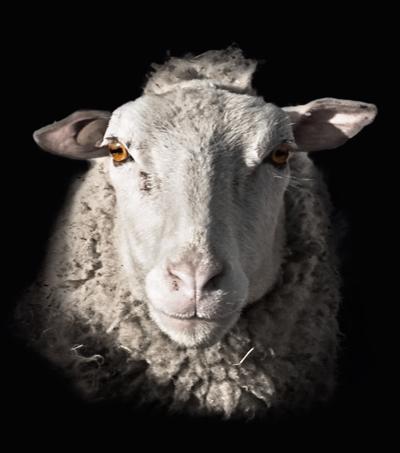 lamb.kevin
