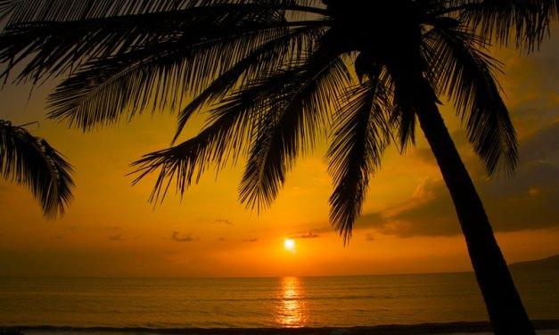 Palm Sunday – Why the Palms?