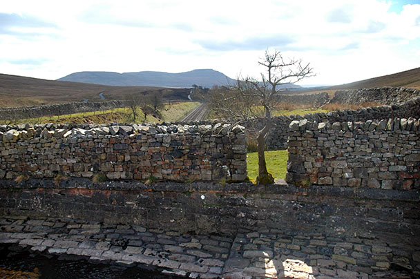 Tree in wall, Blea Moor, near Whernside