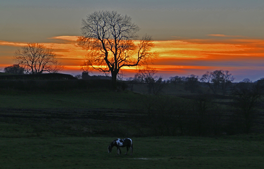 Horse and sunset on banks of Ribble near Wigglesworth