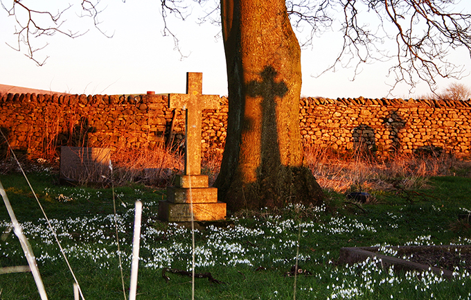 Snowdrops and shadows at sunset