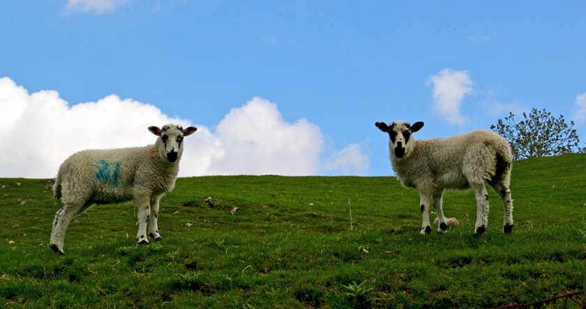Ribblesdale bookends