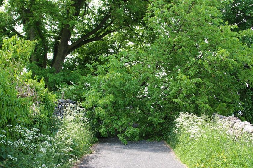 Dales fallentree