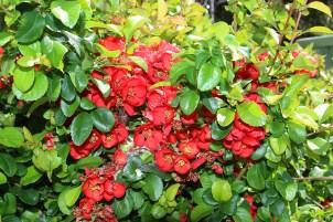 Ribblesdale flowergarden2