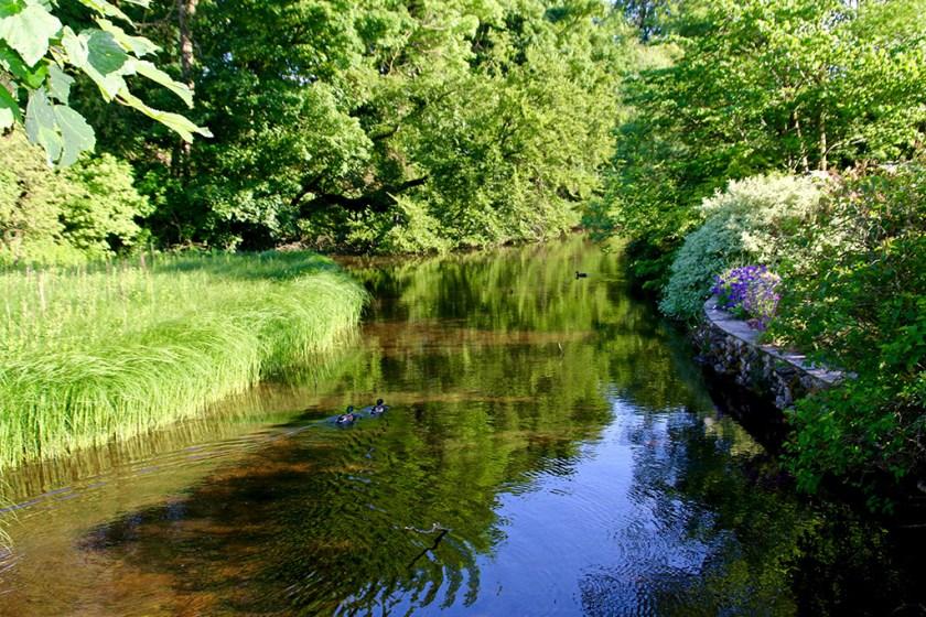 Dales pond1