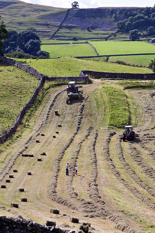 Ribble hayfield
