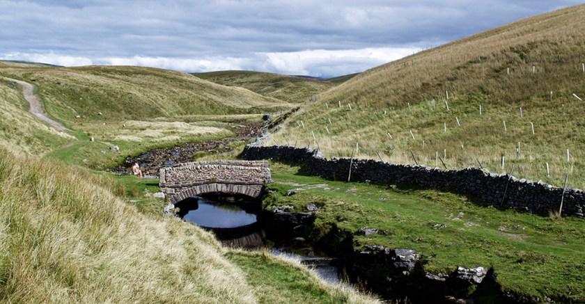Dales lingbridge