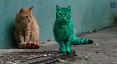 Gato misterioso cor verde espanta moradores de Varna