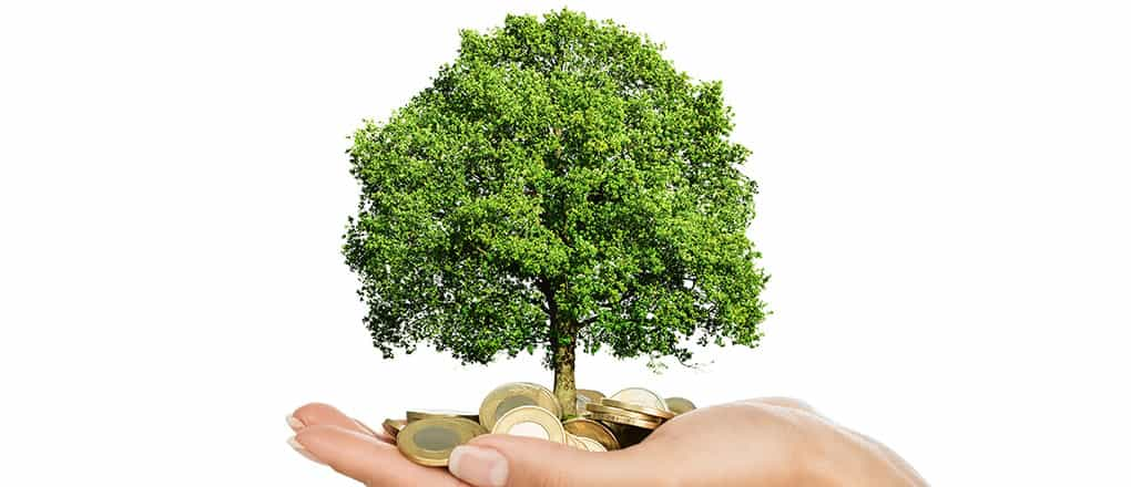 Close up of female hand holding stack of golden coins with small tree growing out of it