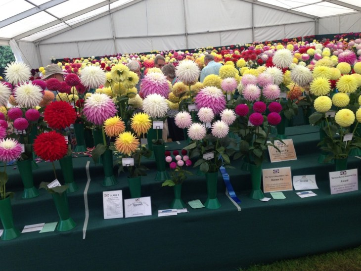 The National Dahlia Society's Annual Show 2014 blew me away and converted me instantly into a Dahlia fan