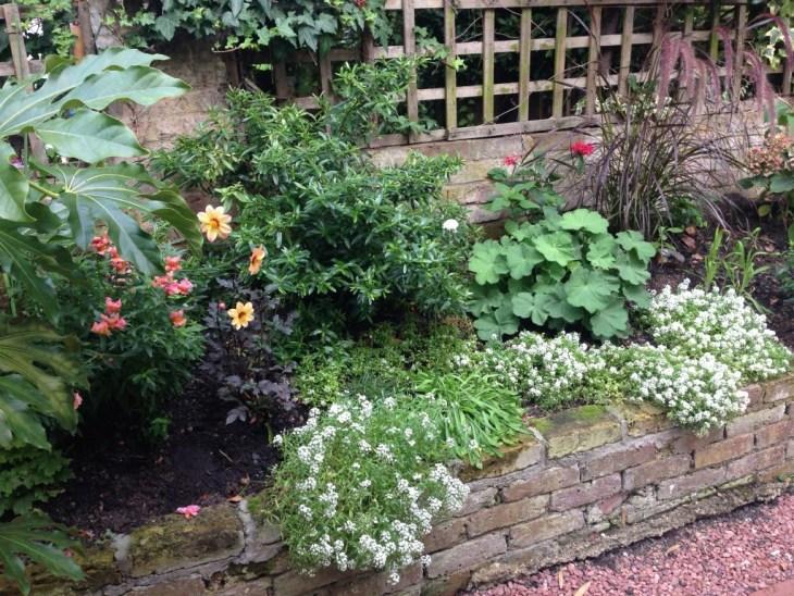 Clapham garden September