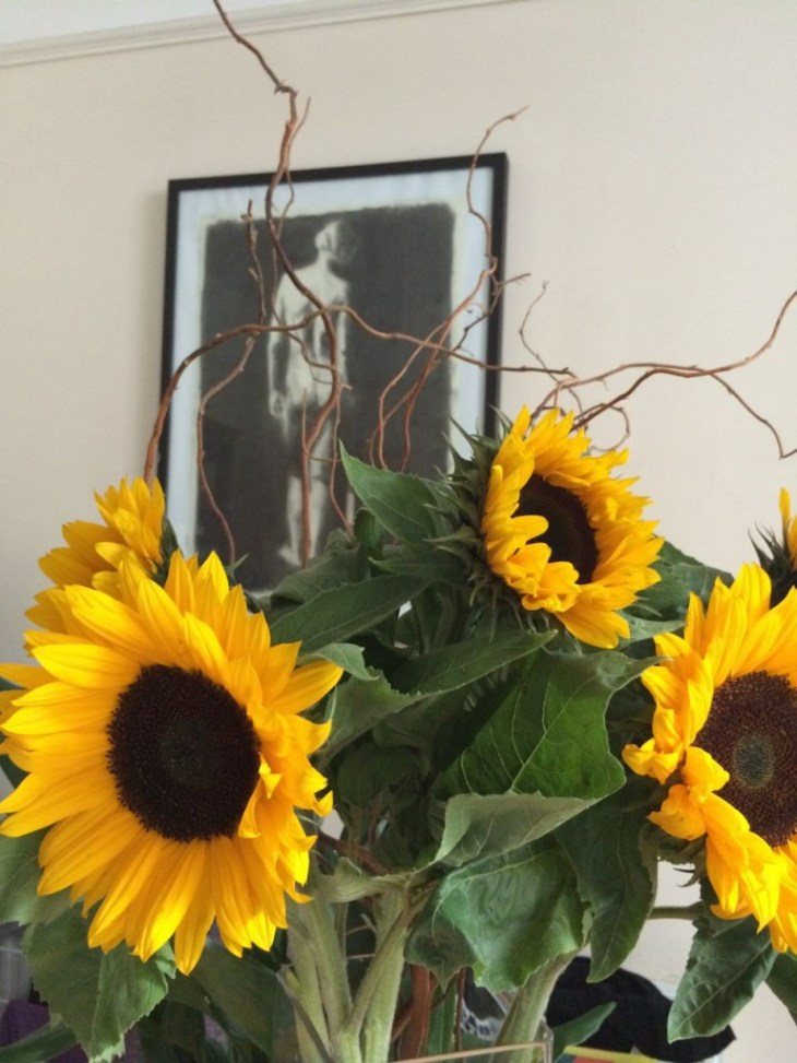 Bought for a fiver, some stunning Helianthus annus from Columbia Road Flower Market