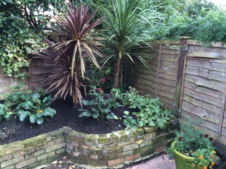 The Cordylines seem to be much happier now it's cooler and wetter. The Astilbes have looked a bit dodgy all summer - perhaps our garden is too dry. Otherwise, the Brunnera is doing well here too, as is the other Hellebore, fern. While the Echineceas are shutting down.