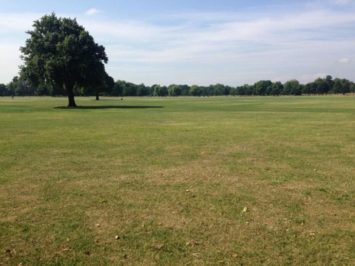 Clapham Common always looks beautiful