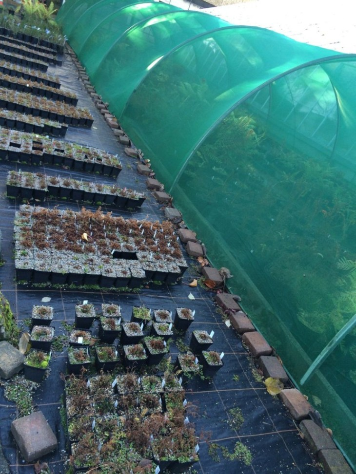 Seedlings in the nursery