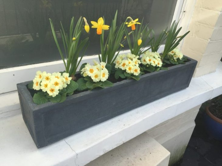 Temporary spring window boxes
