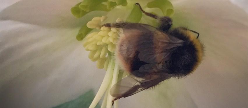 Fuzzy buzz
