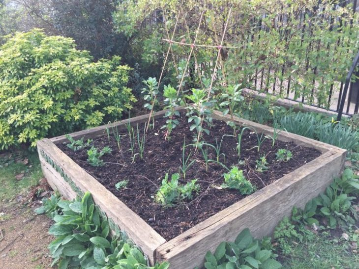 My raised bed has suddenly sprung into action in the growing warmth and light. It has been very dry recently here though.