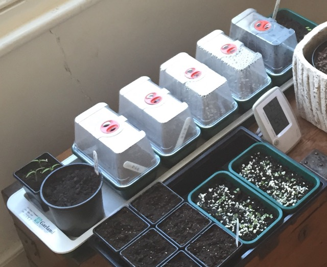 Review: Garland Super 7 electric heated windowsill propagator