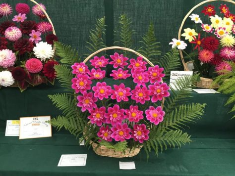 national-dahlia-collection-rhs-wisley-201530
