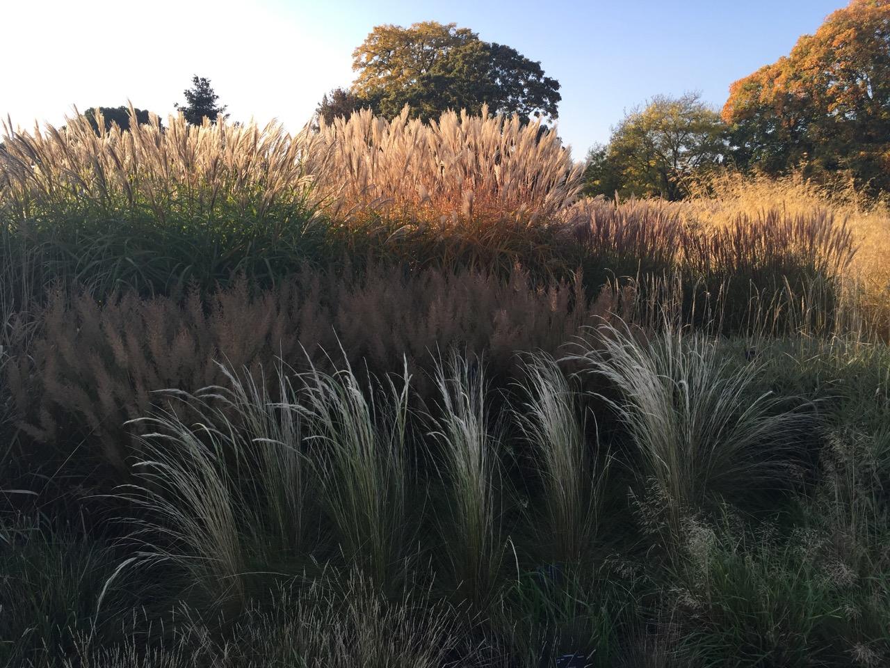 Kew Gardens Autumn   1