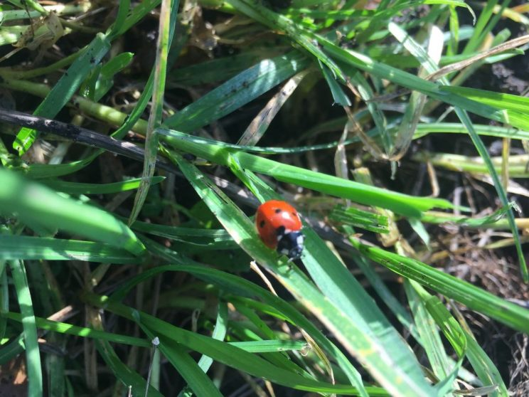 December ladybird anyone? Incredibly mild weather.