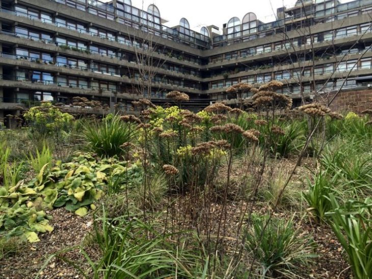 Barbican meadow planting