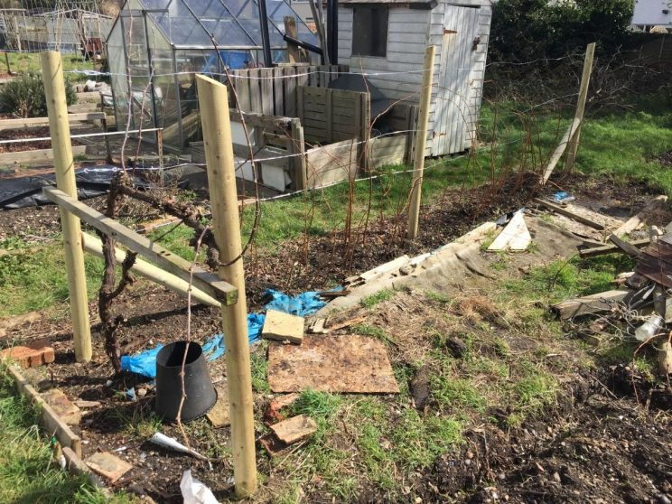 New allotment raspberry supports