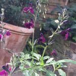 Garden and landscape design in Clapham